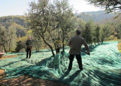 Boggioli-the-harvest-1