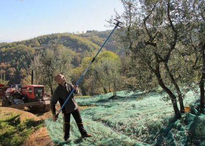 Boggioli-the-harvest-3