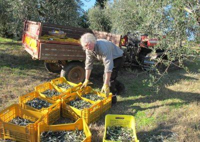 Boggioli-the-harvest-4